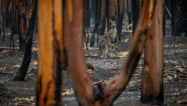 Compounding Tragedy - Reflection on the Australian bushfires - Photo by Jo-Anne McArthur, Unsplash